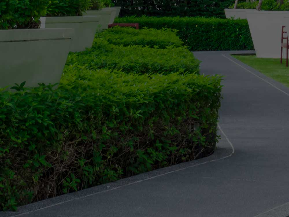 Washington, DC Commercial Landscaping