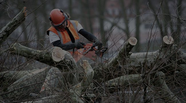 Washington, DC  Tree Service