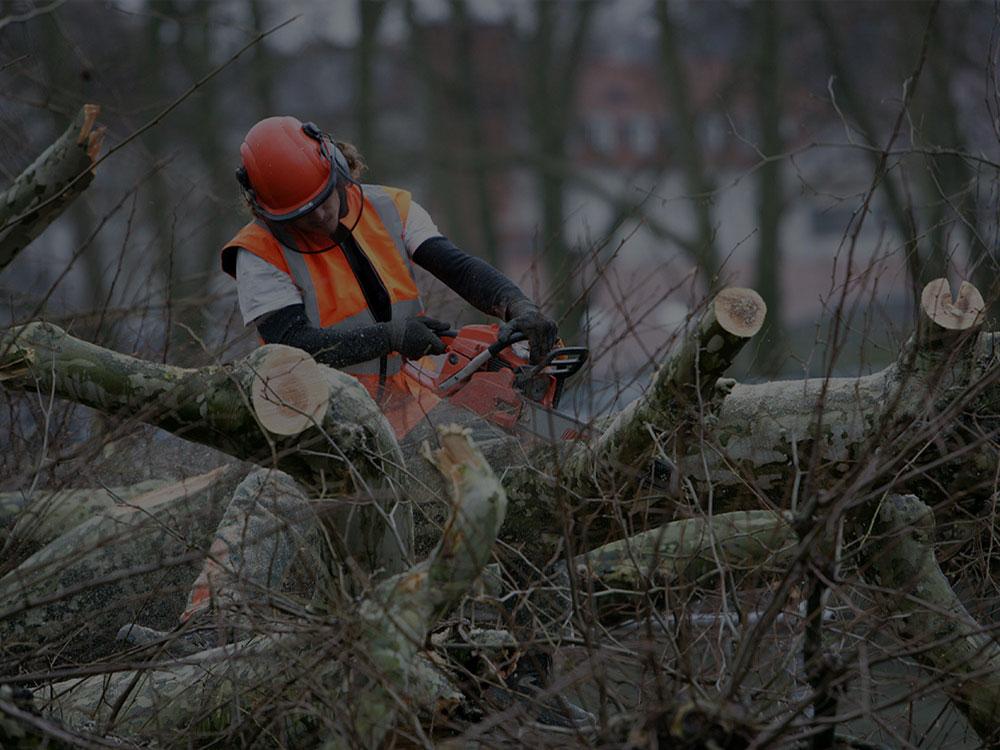Washington, DC Tree Removal
